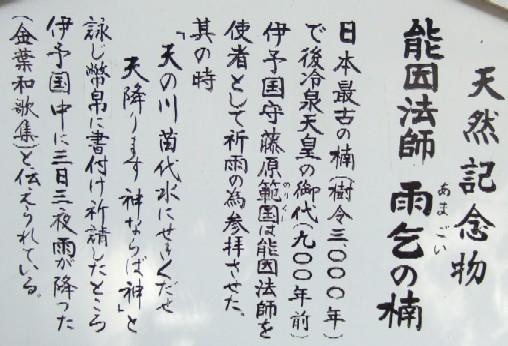 大三島大山雨乞の楠.JPG